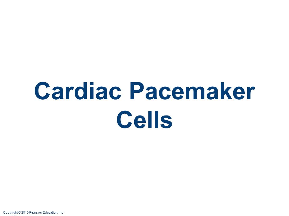 Copyright © 2010 Pearson Education, Inc. Cardiac Pacemaker Cells