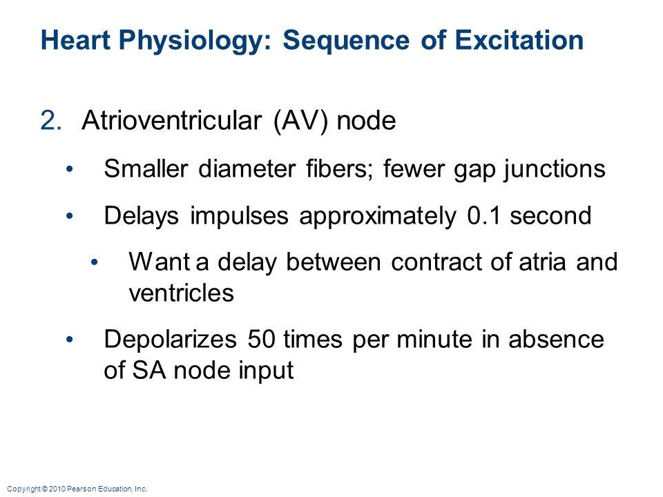 Copyright © 2010 Pearson Education, Inc. Heart Physiology: Sequence of Excitation 2.Atrioventricular (AV) node Smaller diameter fibers; fewer gap junc
