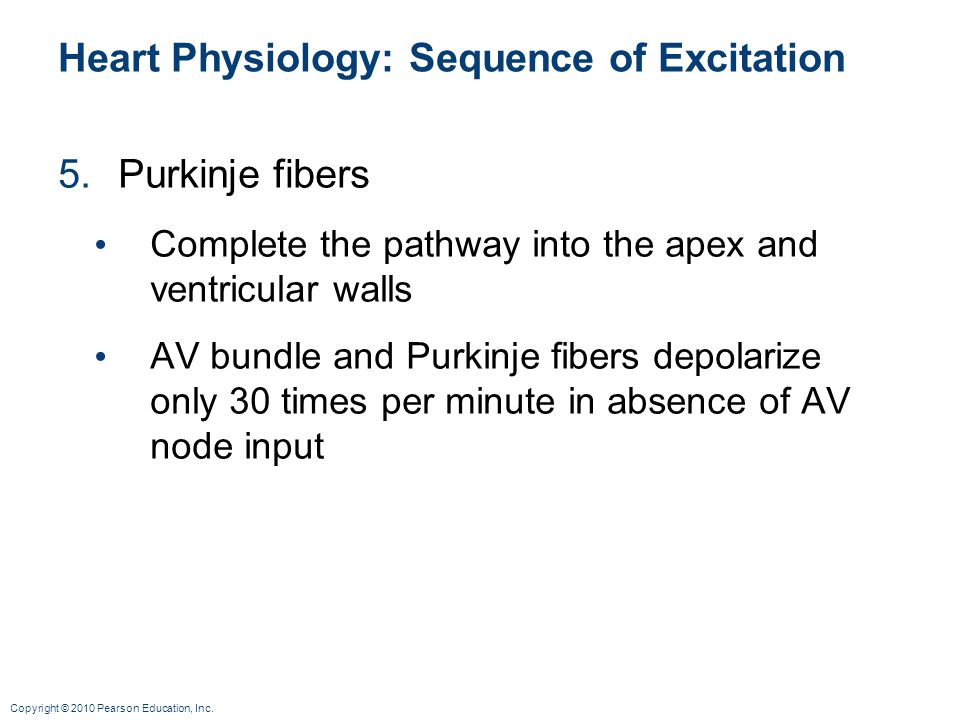 Copyright © 2010 Pearson Education, Inc. Heart Physiology: Sequence of Excitation 5.Purkinje fibers Complete the pathway into the apex and ventricular