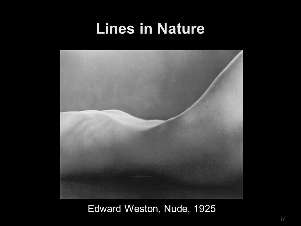 14 Edward Weston, Nude, 1925