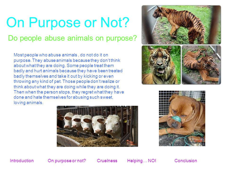 On Purpose or Not? Do people abuse animals on purpose? Most people who abuse animals, do not do it on purpose. They abuse animals because they don't t