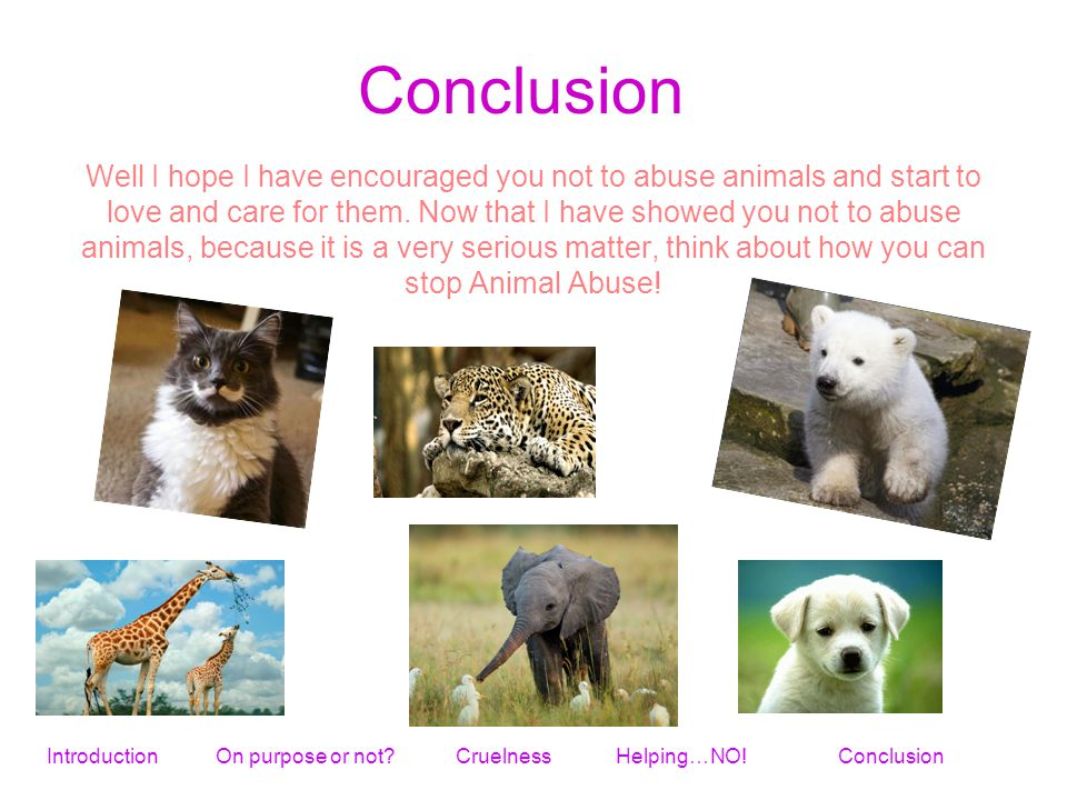 Well I hope I have encouraged you not to abuse animals and start to love and care for them.