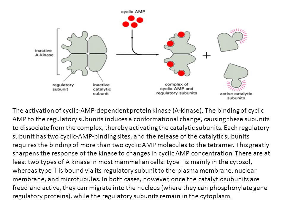 The activation of cyclic-AMP-dependent protein kinase (A-kinase).