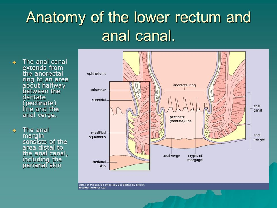 Anatomy of the lower rectum and anal canal.  The anal canal extends from the anorectal ring to an area about halfway between the dentate (pectinate)