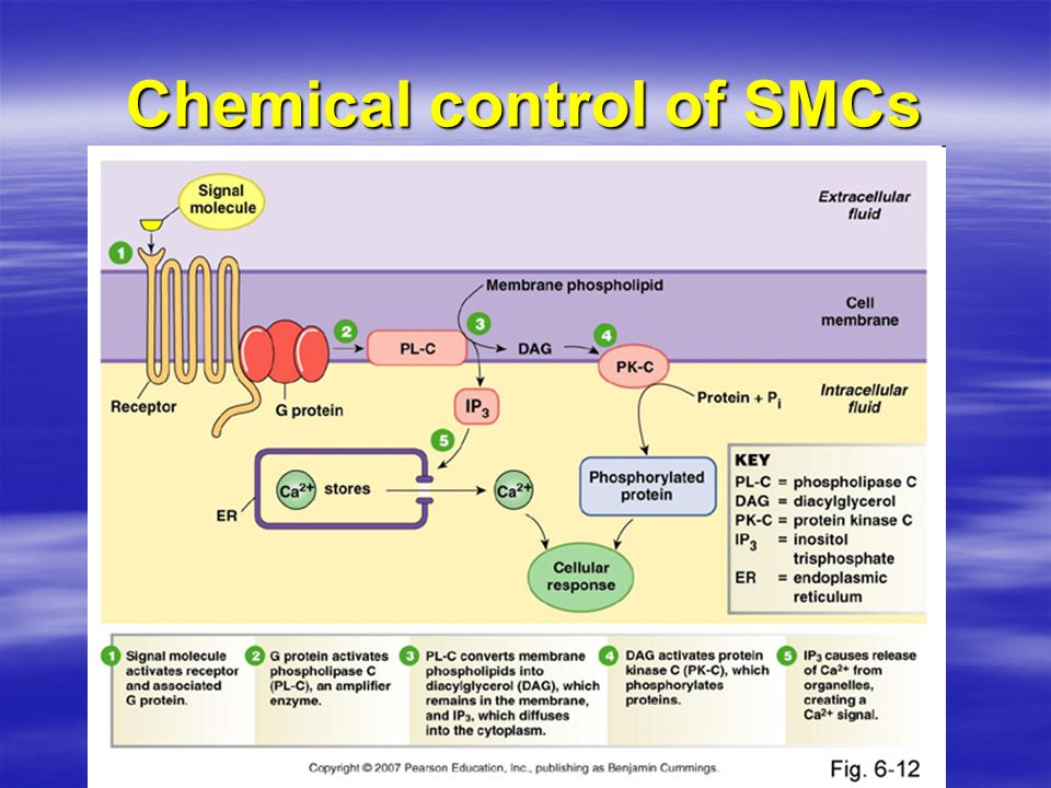 Chemical control of SMCs