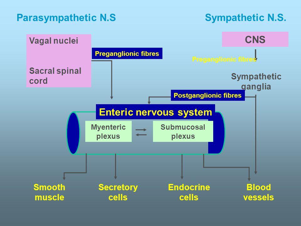 Myenteric plexus Submucosal plexus Enteric nervous system CNS Sympathetic ganglia Vagal nuclei Sacral spinal cord Preganglionic fibres Postganglionic