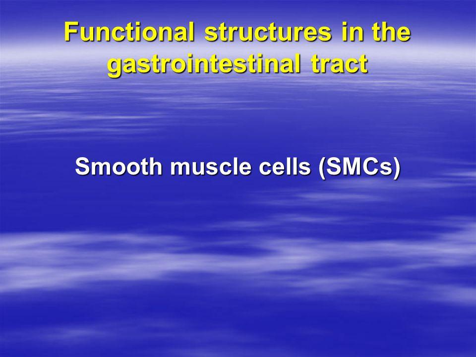 Secretory Cells Mucous secretion and serous secretion  Solitary cells  Pits  Compound glands  Secretory organs