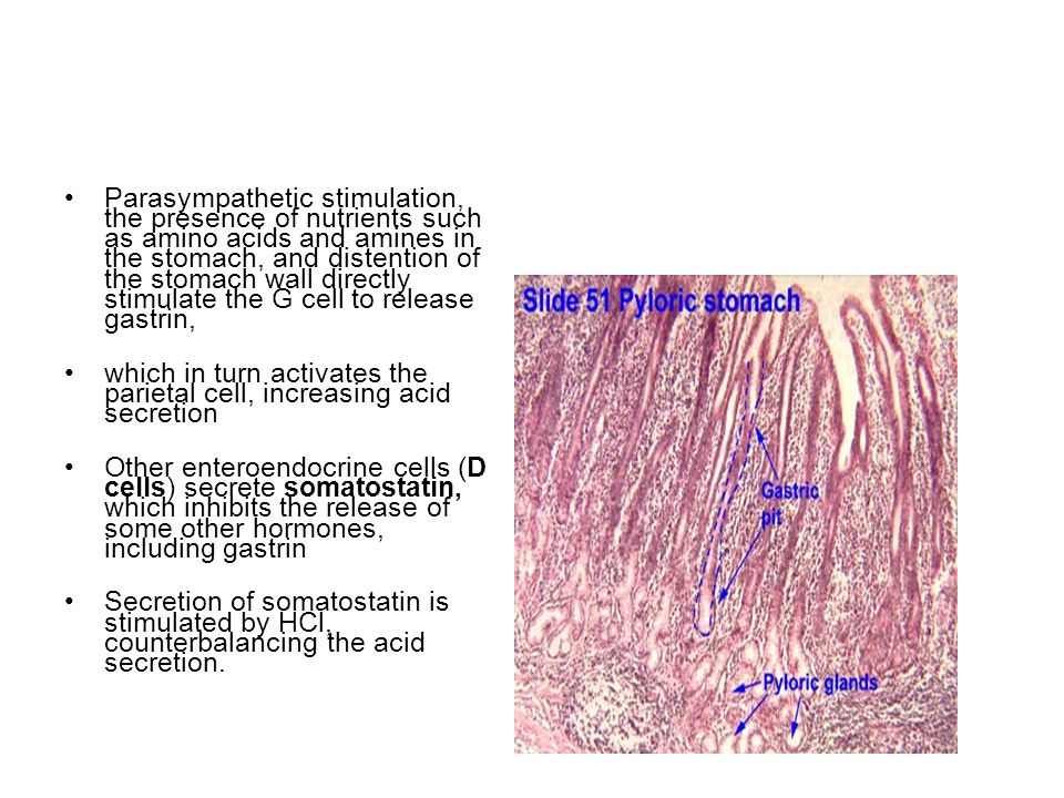 Other layers The submucosa is composed of dense connective tissue containing blood and lymph vessels; it is infiltrated by lymphoid cells, macrophages, and mast cells.