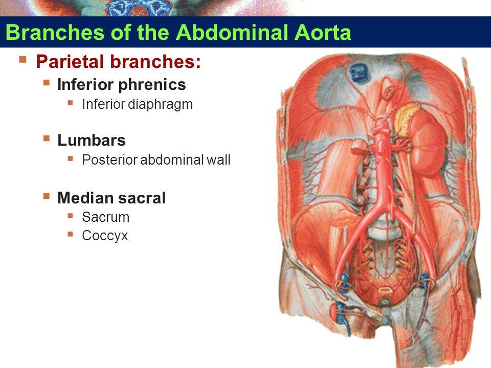 Branches of the Abdominal Aorta  Parietal branches:  Inferior phrenics  Inferior diaphragm  Lumbars  Posterior abdominal wall  Median sacral  S
