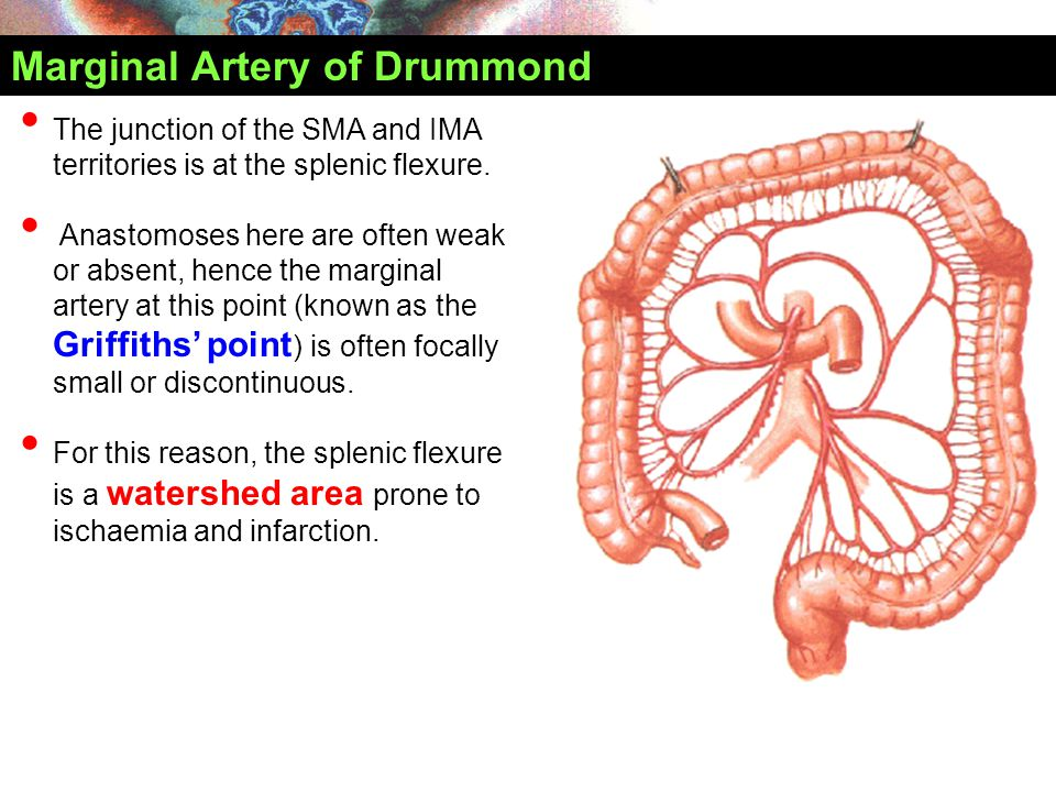 Marginal Artery of Drummond The junction of the SMA and IMA territories is at the splenic flexure. Anastomoses here are often weak or absent, hence th