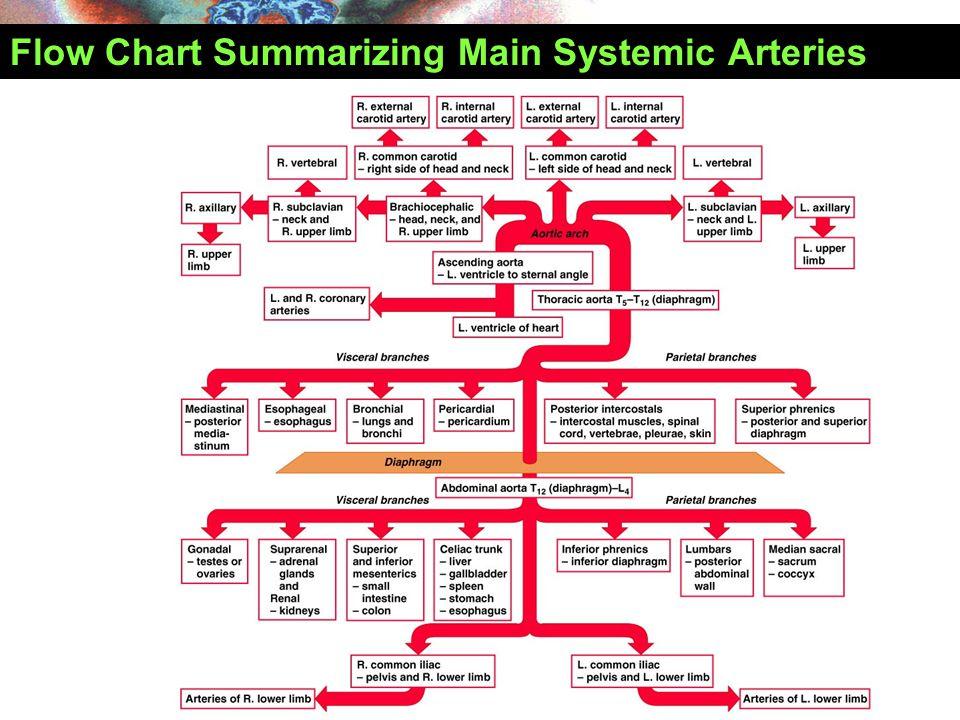 Flow Chart Summarizing Main Systemic Arteries