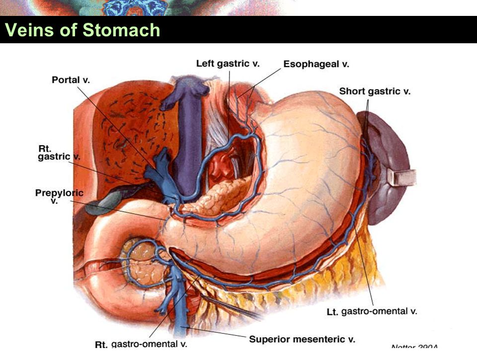 Veins of Stomach
