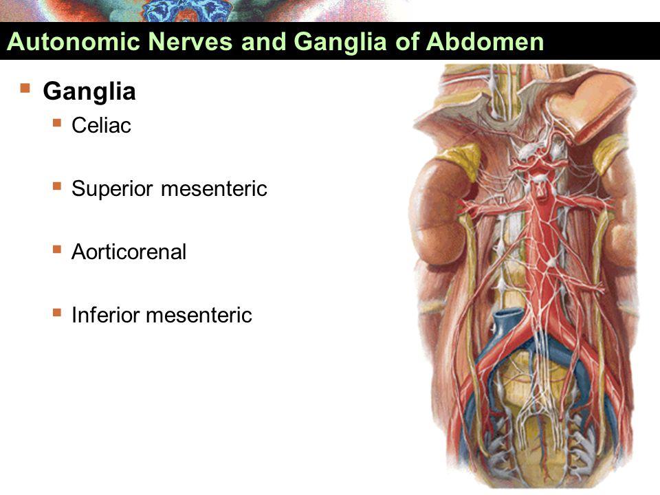 Autonomic Nerves and Ganglia of Abdomen  Ganglia  Celiac  Superior mesenteric  Aorticorenal  Inferior mesenteric