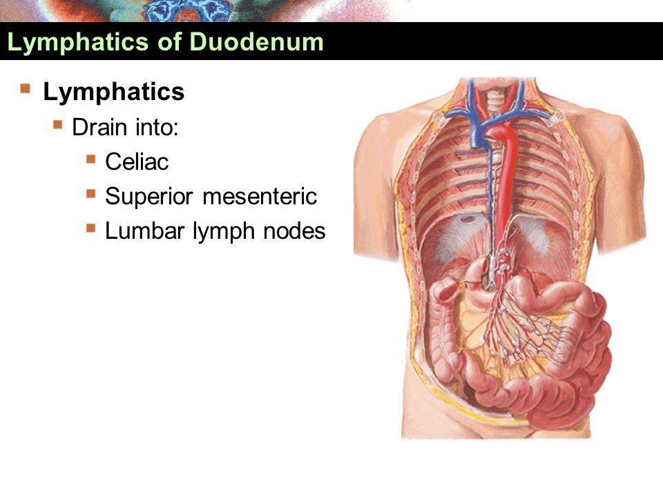 Lymphatics of Duodenum  Lymphatics  Drain into:  Celiac  Superior mesenteric  Lumbar lymph nodes