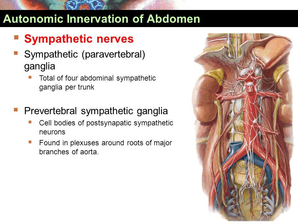  Sympathetic nerves  Sympathetic (paravertebral) ganglia  Total of four abdominal sympathetic ganglia per trunk  Prevertebral sympathetic ganglia