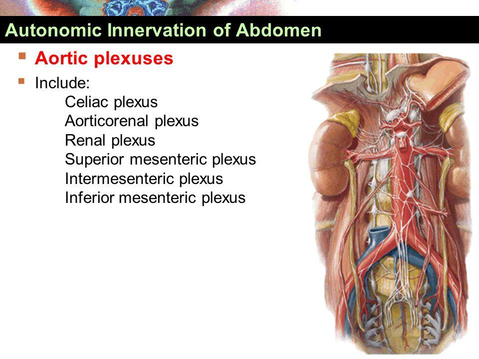  Aortic plexuses  Include: Celiac plexus Aorticorenal plexus Renal plexus Superior mesenteric plexus Intermesenteric plexus Inferior mesenteric plex