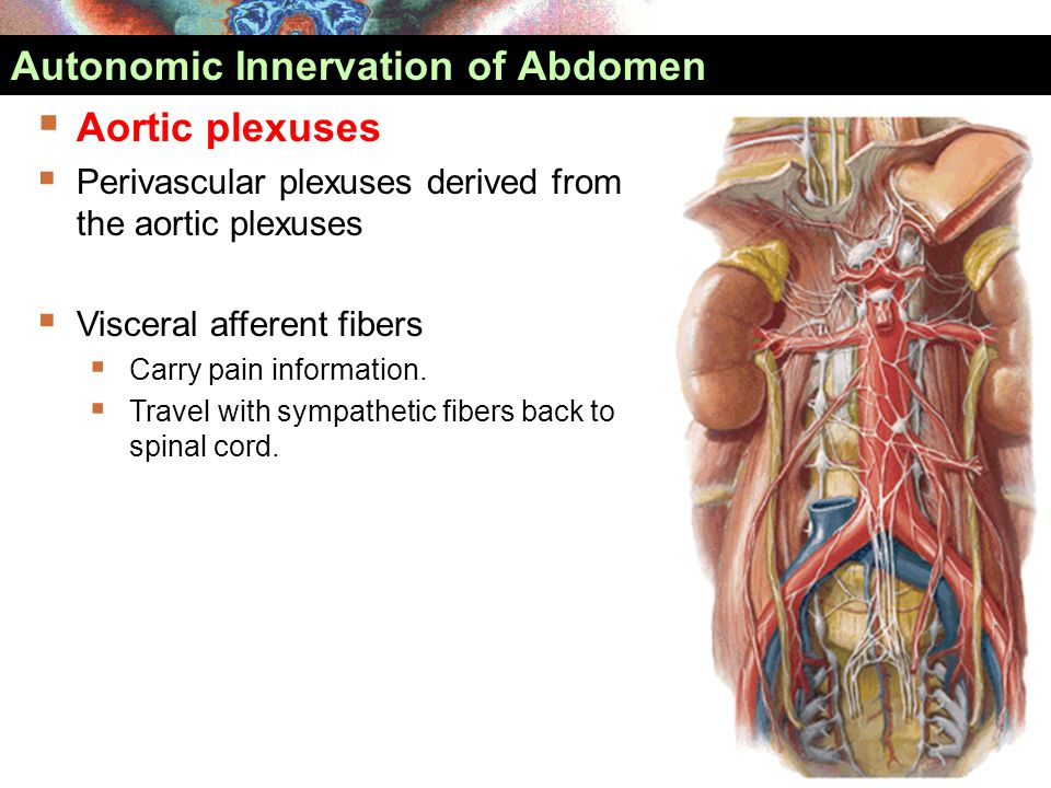  Aortic plexuses  Perivascular plexuses derived from the aortic plexuses  Visceral afferent fibers  Carry pain information.  Travel with sympathe