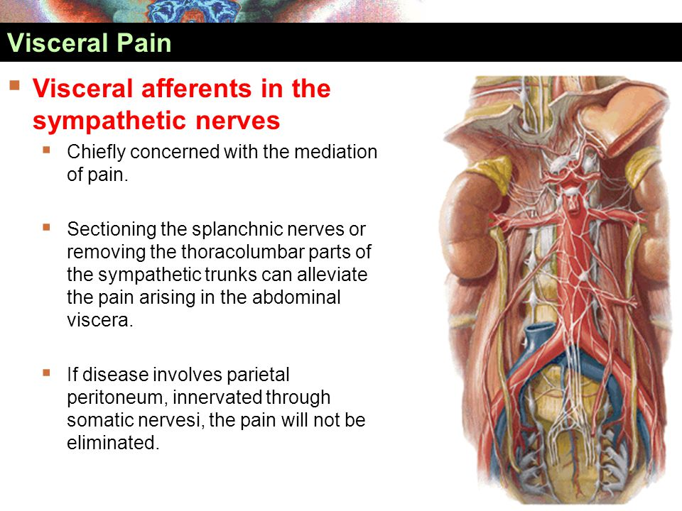  Visceral afferents in the sympathetic nerves  Chiefly concerned with the mediation of pain.  Sectioning the splanchnic nerves or removing the thor