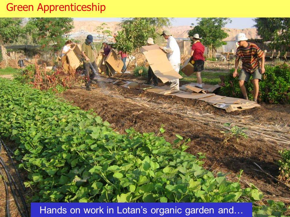 Hands on work in Lotan's organic garden and… Green Apprenticeship