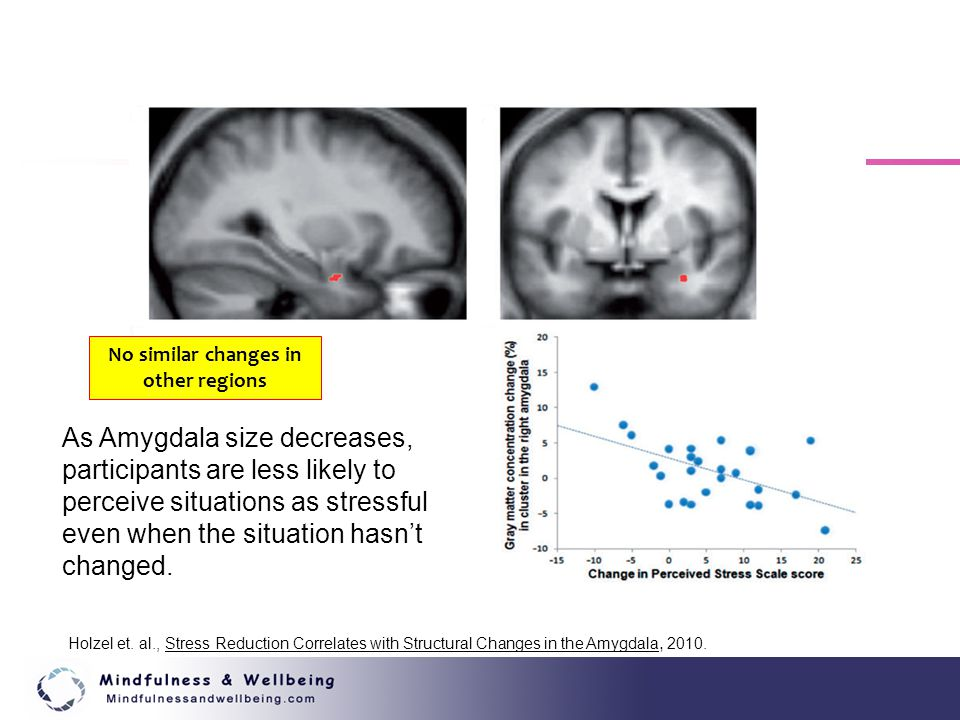 No similar changes in other regions As Amygdala size decreases, participants are less likely to perceive situations as stressful even when the situati