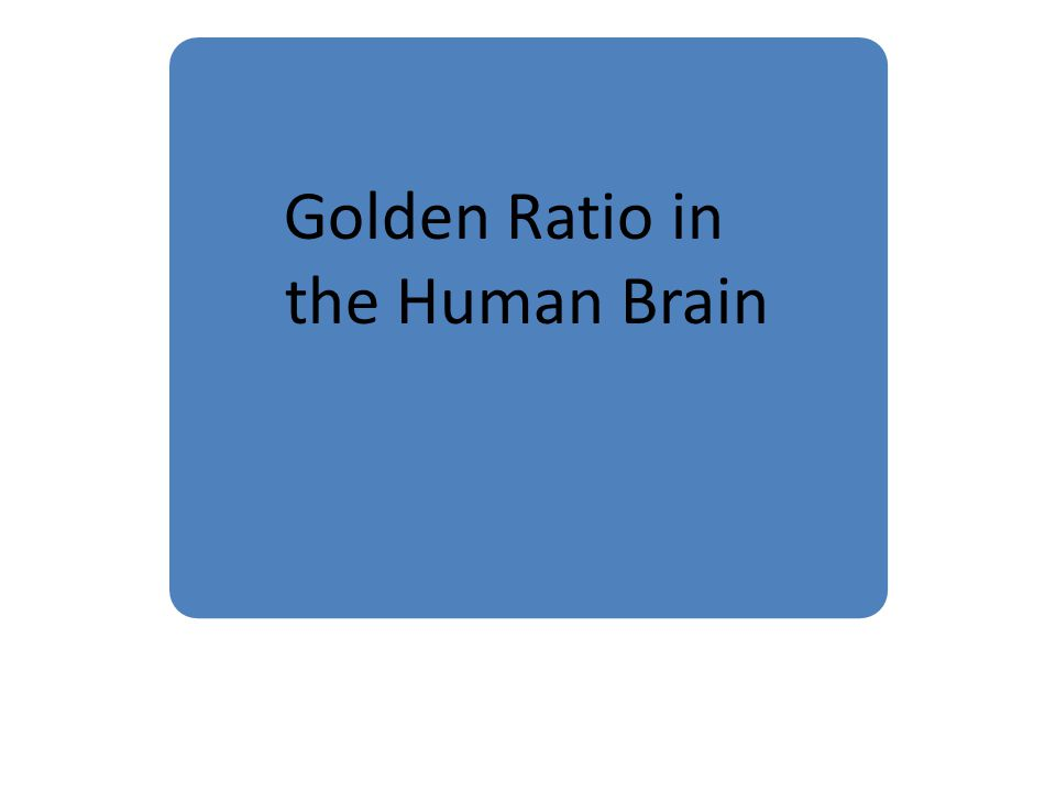 Golden Ratio in the Human Brain