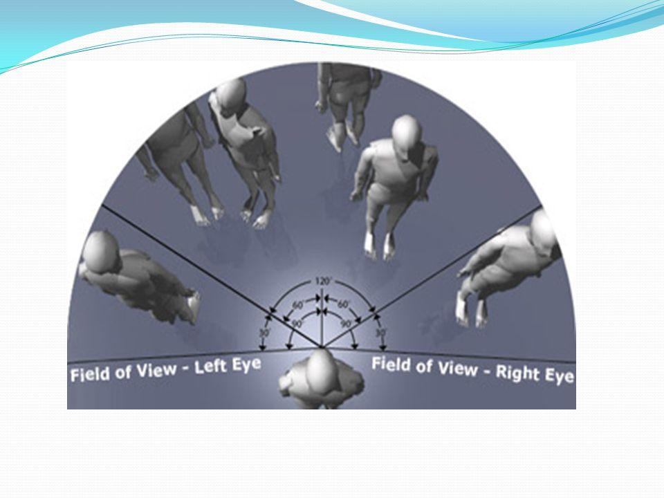 Normal visual field Superior=60 degrees Inferior=75 degrees Temporal=100 degrees nasally= 60 degrees
