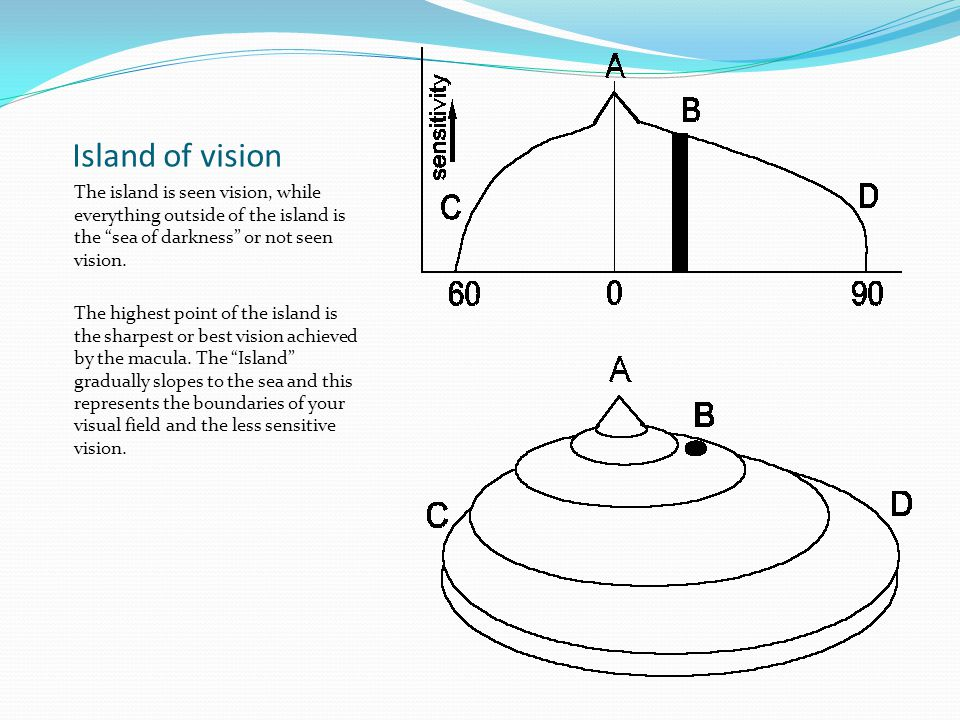 Physiological blind spot Corresponds to the location of the optic nerve head in the retina.