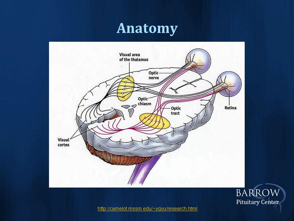 Anatomy http://camelot.mssm.edu/~ygyu/research.html