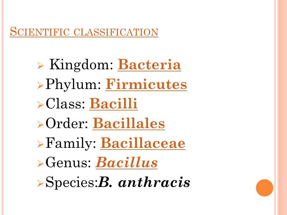 S CIENTIFIC CLASSIFICATION  Kingdom: Bacteria Bacteria  Phylum: Firmicutes Firmicutes  Class: Bacilli Bacilli  Order: Bacillales Bacillales  Family: Bacillaceae Bacillaceae  Genus: Bacillus Bacillus  Species: B.