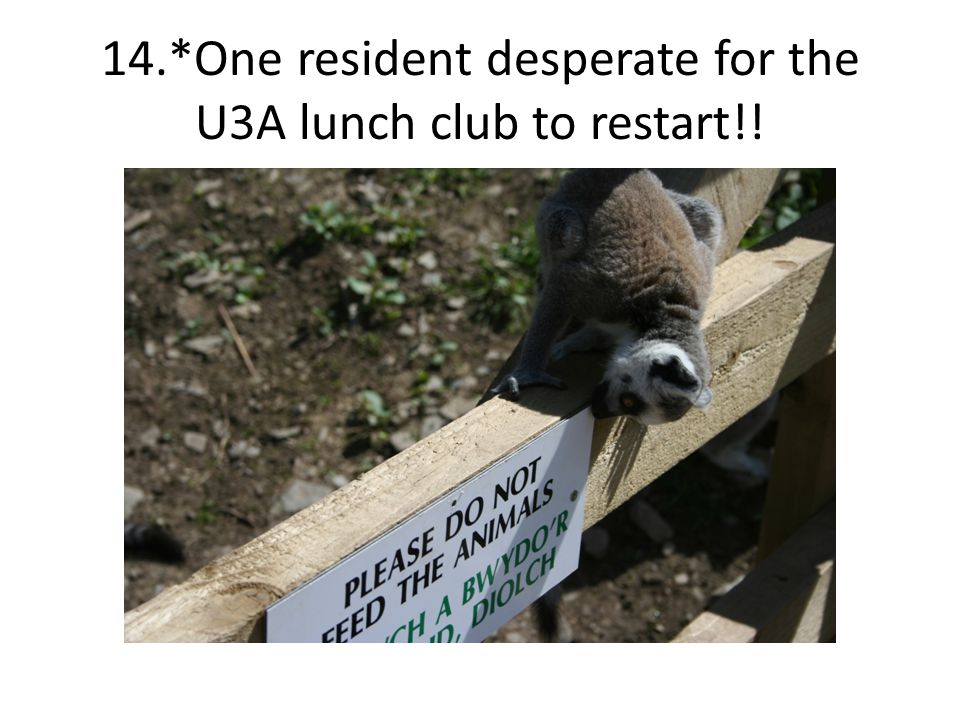14.*One resident desperate for the U3A lunch club to restart!!