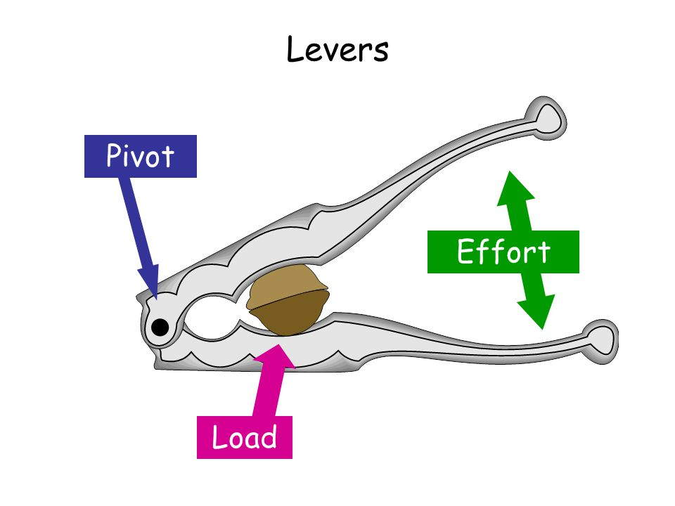Levers Effort Load Pivot