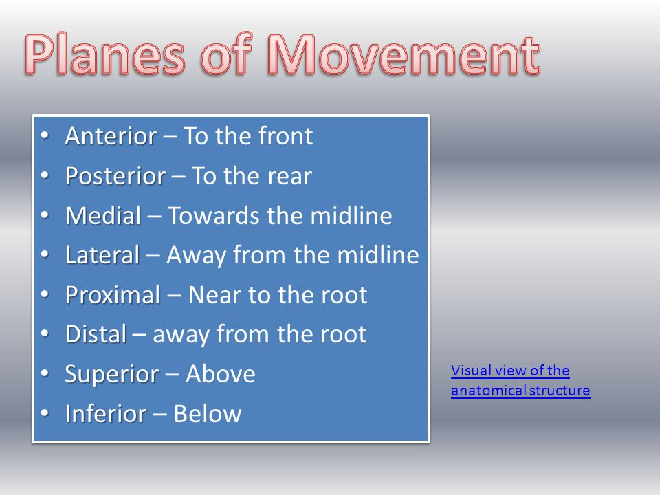Anterior Anterior – To the front Posterior Posterior – To the rear Medial Medial – Towards the midline Lateral Lateral – Away from the midline Proxima