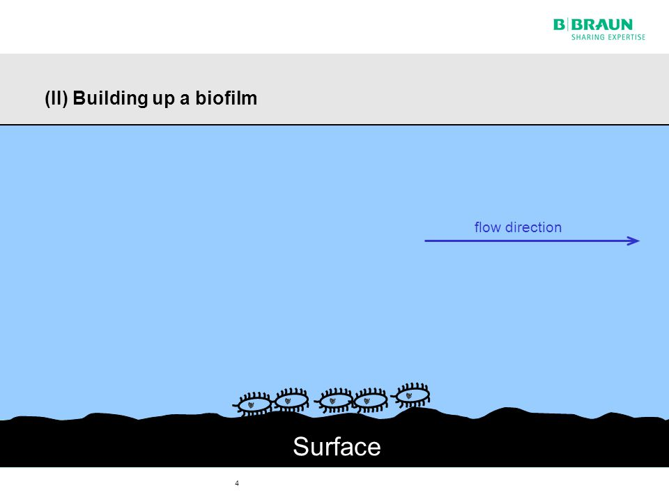 4 (II) Building up a biofilm Surface flow direction