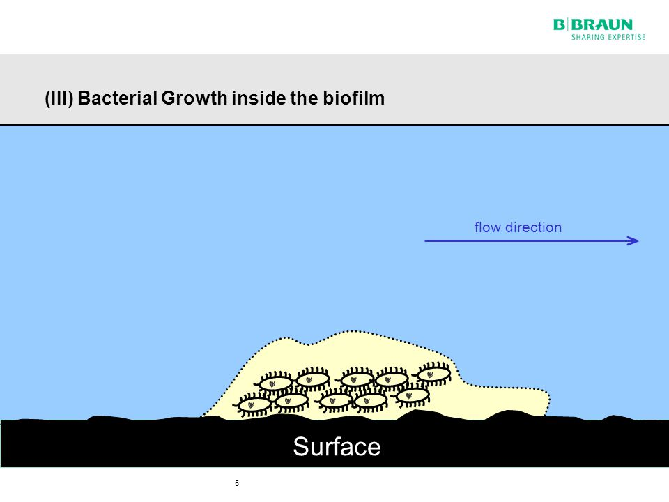6 (IV) Bacteria build up a biofilm to protect themselves from enemies Surface flow direction