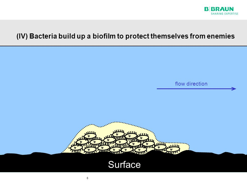 7 (V) Release of bacteria, leading to renewed colonisation elsewhere and again bacteria replication Surface flow direction