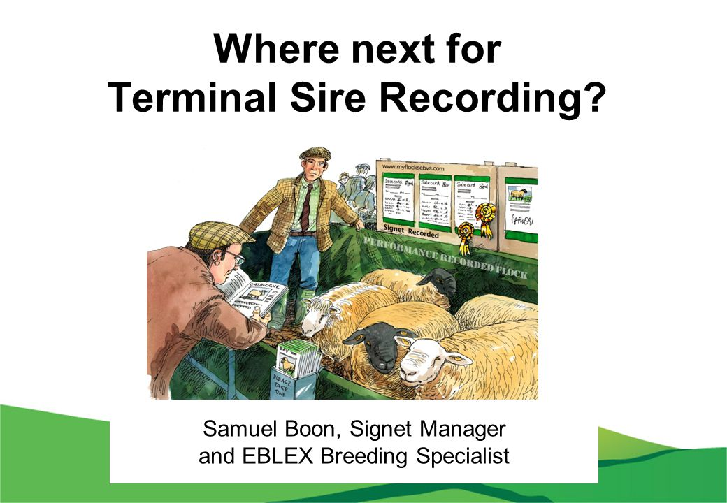 Where next for Terminal Sire Recording? Samuel Boon, Signet Manager and EBLEX Breeding Specialist