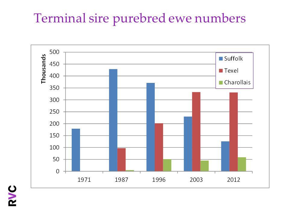 Terminal sire purebred ewe numbers