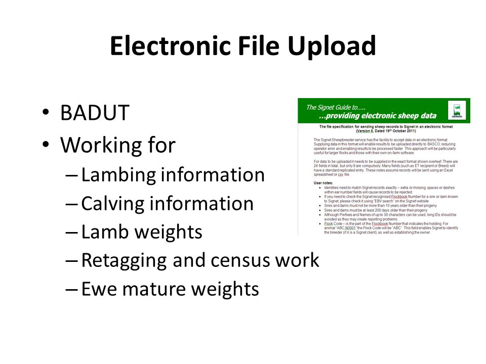 Electronic File Upload BADUT Working for – Lambing information – Calving information – Lamb weights – Retagging and census work – Ewe mature weights