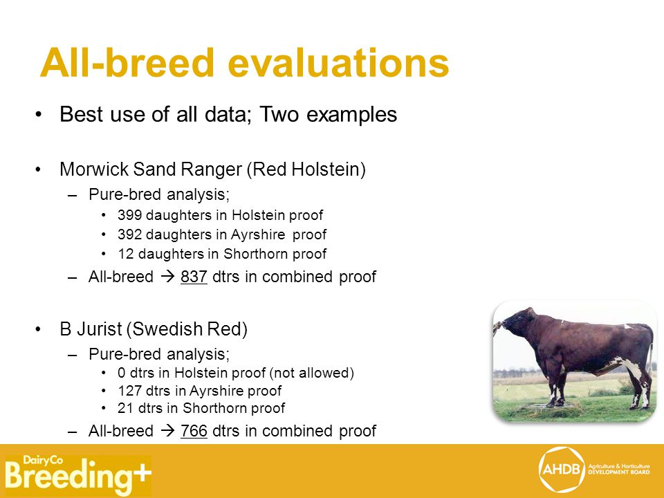 All-breed evaluations Best use of all data; Two examples Morwick Sand Ranger (Red Holstein) –Pure-bred analysis; 399 daughters in Holstein proof 392 daughters in Ayrshire proof 12 daughters in Shorthorn proof –All-breed  837 dtrs in combined proof B Jurist (Swedish Red) –Pure-bred analysis; 0 dtrs in Holstein proof (not allowed) 127 dtrs in Ayrshire proof 21 dtrs in Shorthorn proof –All-breed  766 dtrs in combined proof