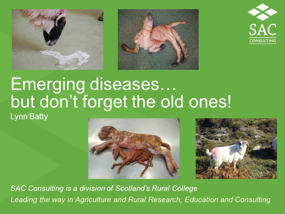 Leading the way in Agriculture and Rural Research, Education and Consulting SAC Consulting is a division of Scotland's Rural College Emerging diseases… but don't forget the old ones.