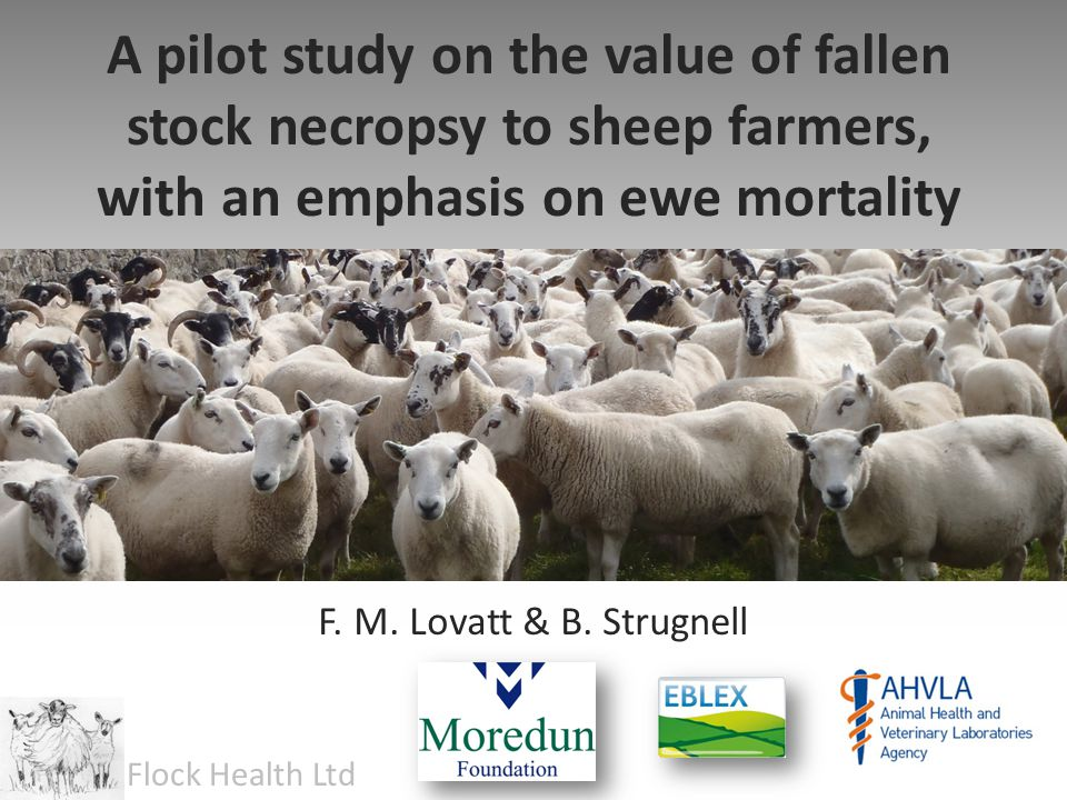 Growing Lambs 1.Worms 2.Clostridial Disease (pulpy kidney etc.) 3.Coccidiosis 4.Pasteurellosis 5.Acute/ Chronic Fluke …probably together account for 80% of losses (and are NOT hard to diagnose)