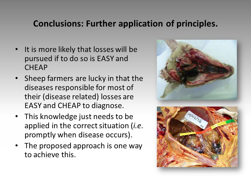 Conclusions: Further application of principles. It is more likely that losses will be pursued if to do so is EASY and CHEAP Sheep farmers are lucky in