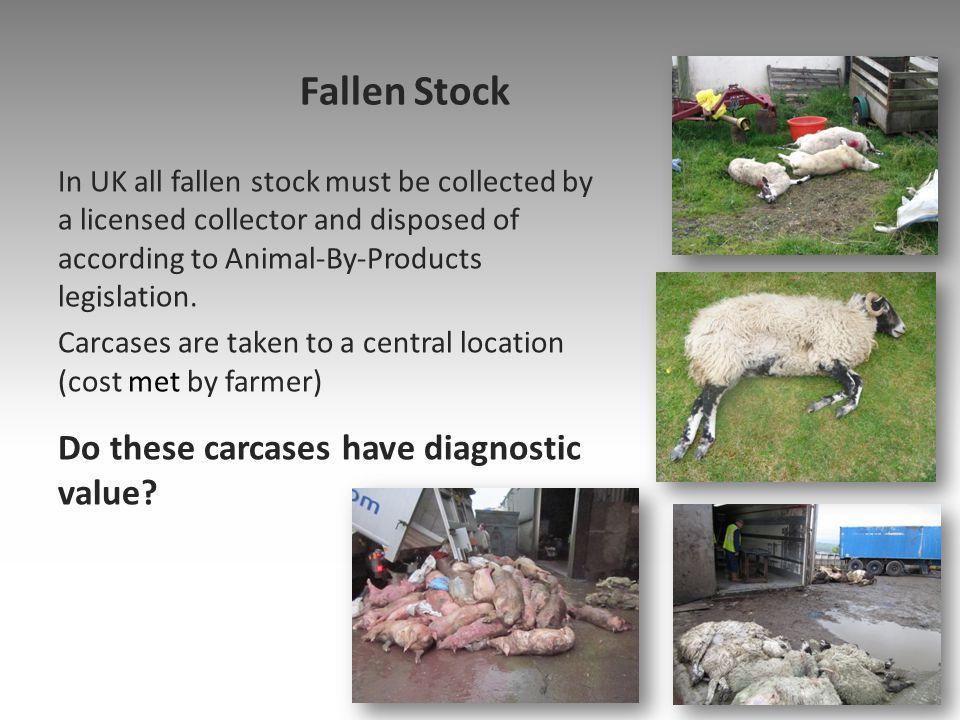 Diseases of adult ewes: Diagnosis DiseaseDiagnostic criteraTreatment/ control JohnesVisual +/-PCR or ZN smear Manage/ vaccinate OPAVisual + Histopathology Manage/age stratify FlukeVisualTreat promptly HaemonchosisVisual +/- Abo wash Treat