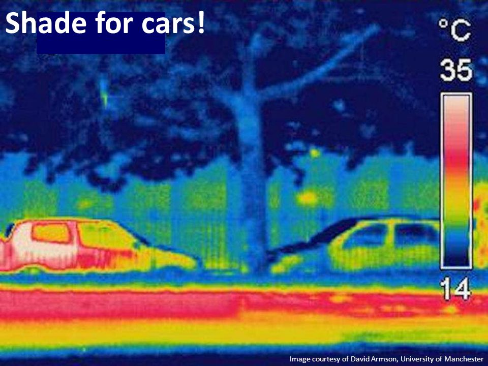 Image courtesy of David Armson, University of Manchester Shade for cars!