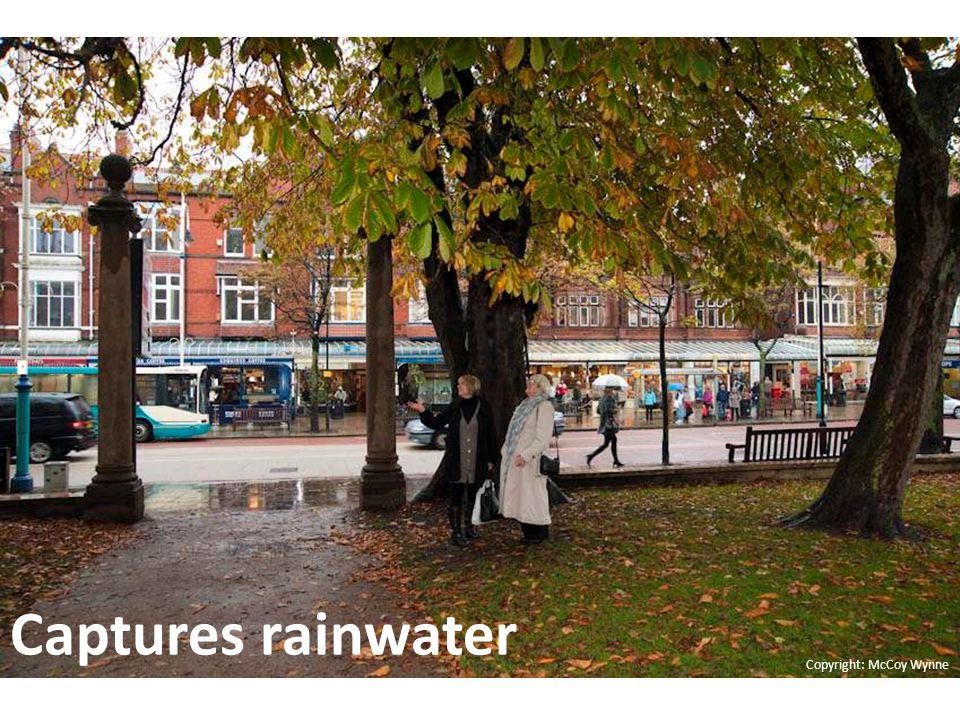 Allows rainwater to soak into the ground Copyright: McCoy Wynne