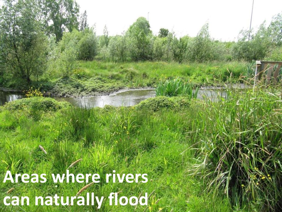 Areas where rivers can naturally flood