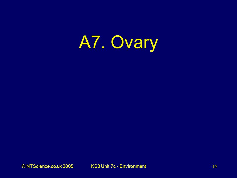 © NTScience.co.uk 2005KS3 Unit 7c - Environment15 A7. Ovary