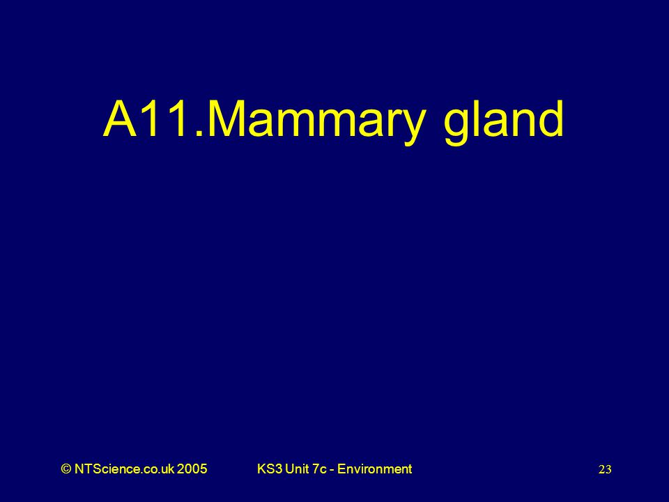 © NTScience.co.uk 2005KS3 Unit 7c - Environment23 A11.Mammary gland