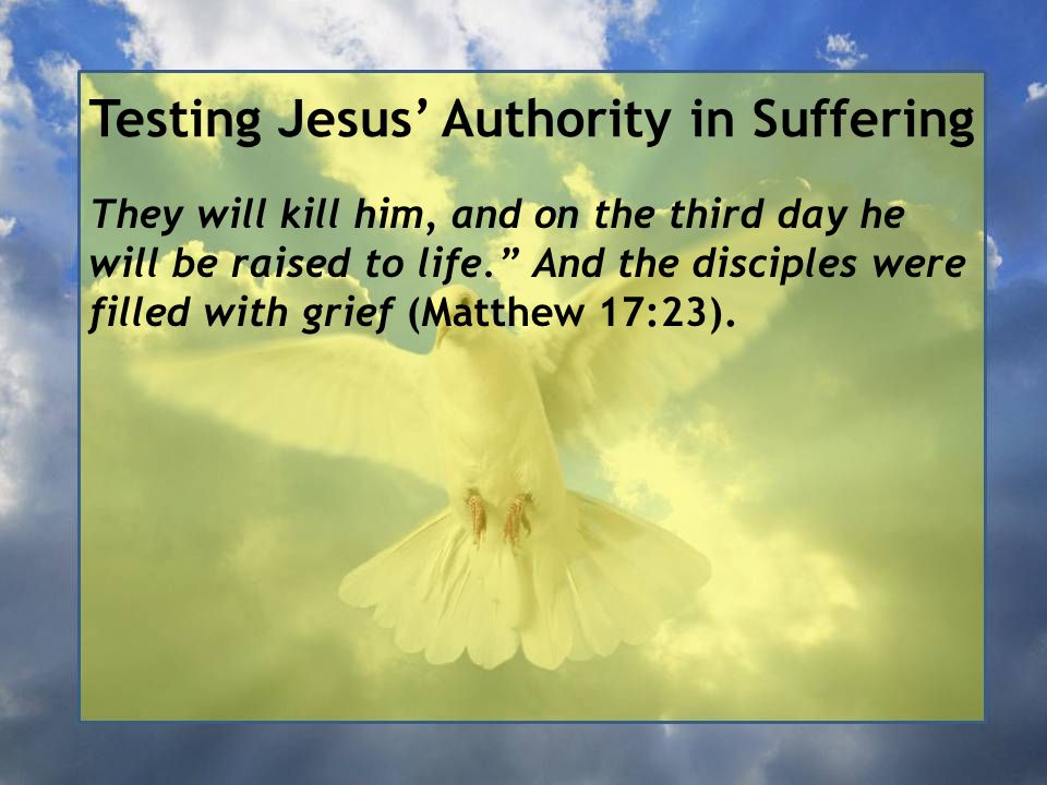 Testing Jesus' Authority in Suffering They will kill him, and on the third day he will be raised to life. And the disciples were filled with grief (Matthew 17:23).