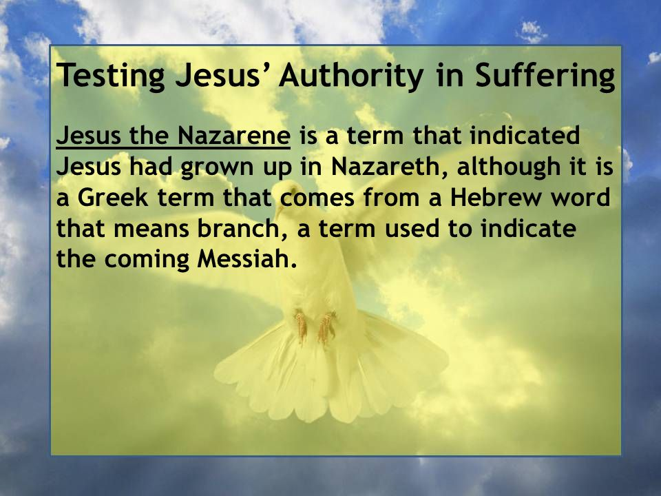 Testing Jesus' Authority in Suffering Jesus the Nazarene is a term that indicated Jesus had grown up in Nazareth, although it is a Greek term that comes from a Hebrew word that means branch, a term used to indicate the coming Messiah.